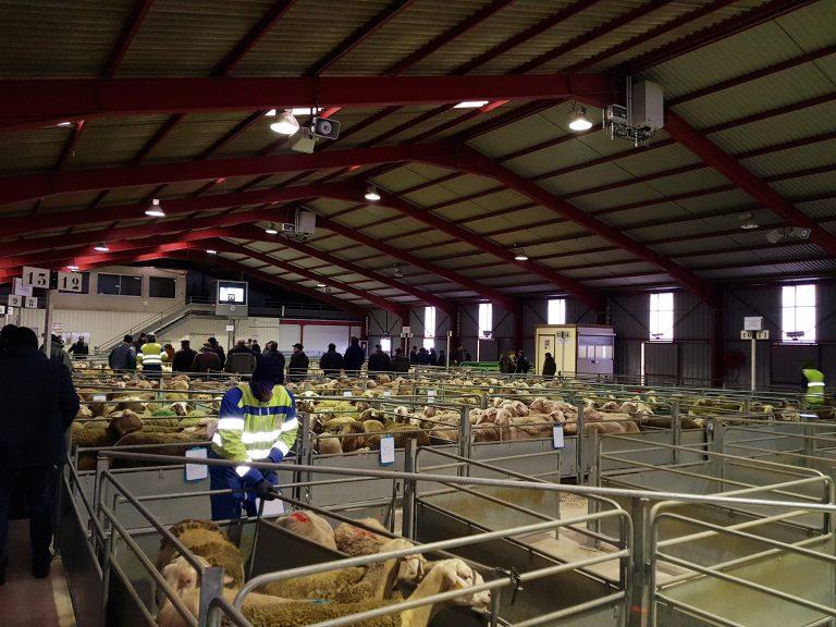 Marché aux ovins